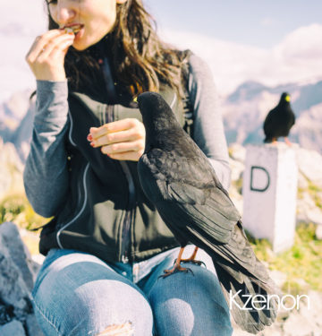 Alps-hiking-girl-crow